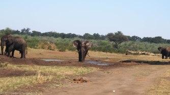 Mahango Game Park