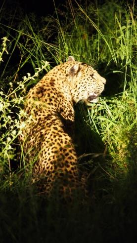 Sabi Sabi Game Reserve