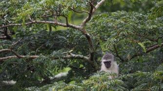 Parc National au nord de St Lucia