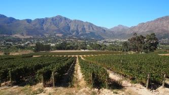 Région de Stellenbosch